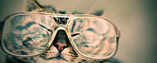 Curiosity May Kill The Cat, But It Will Make You A Superior Leader