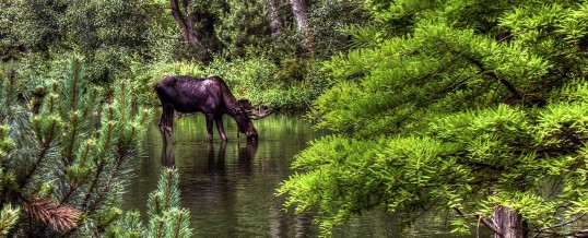 Are You Missing Out On The Moose In Your Business?