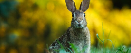 Are You Going Down the Wrong Rabbit Hole?